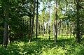 Eymore Wood near Trimpley Reservoir - geograph.org.uk - 846407.jpg