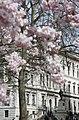 FCO in spring (4497030414).jpg
