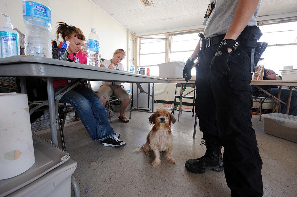 Dog Rescue Volunteer