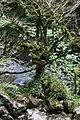 FR64 Gorges de Kakouetta55.JPG