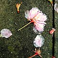 Fallen and withered - Flickr - Stiller Beobachter.jpg