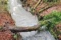 Fallen tree, Crawfordsburn glen - geograph.org.uk - 664934.jpg