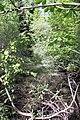 Feuchtgebiet Oberholz I 06.jpg