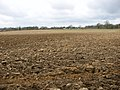 Fields north of the A11 road - geograph.org.uk - 1744476.jpg