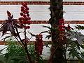 Fleurs inconnues - Jardin Agronomique Tropical 3.JPG