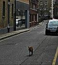 Flickr - Duncan~ - Fox Trot.jpg