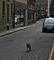 Flickr - Duncan~ - Fox Trot