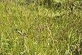 Flore sauvage-4347.jpg