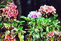 Flores Silvestres 3.jpg