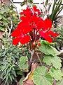 Flower20180523 101301.jpg