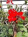 Flower20180523 101309.jpg