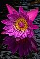 Flower (17707725170).jpg