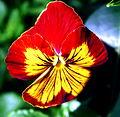 Flower 0331.jpg