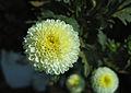 Flowers (66).JPG
