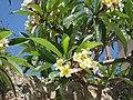 Flowers -- Rhodes, Greece 2008 (4571502553).jpg