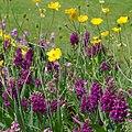 Flowers June 2013, Visit to the Botanics (8999885459).jpg