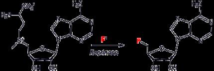 Fluorinase.png