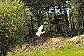 Flying bird Marquenterre.jpg