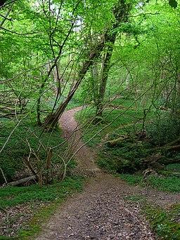 Footpath, Pett Wood - geograph.org.uk - 423714