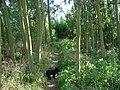 Footpath through trees towards Nineveh Lane on the public footpath from Ackworth. - geograph.org.uk - 534207.jpg
