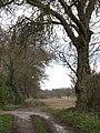 Footpath to Ivy Farm - geograph.org.uk - 740569.jpg