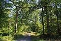 Forêt de Bon-Secours 08.jpg