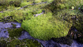 Forest & Moss 02.png