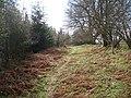 Forest edge path, Haye Park - geograph.org.uk - 965059.jpg