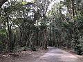 Forest in Miyazaki Shrine 2.jpg