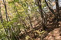 Forest in Mt.Myo 09.jpg
