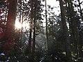 Forest near Langenthal, Zankhölzli - panoramio (1).jpg