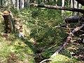Forest near the Große Bode 04.jpg