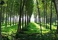 Foresta vicino Cisliano 09-2006 - panoramio.jpg