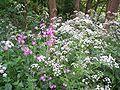 Forestflowers.JPG
