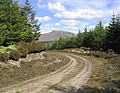 Forestry road - geograph.org.uk - 434901.jpg