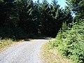 Forestry road near Nant-y-moch - geograph.org.uk - 929807.jpg