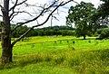 Fort Necessity National Battlefield (dbc1994e-2855-4718-8649-ff6cc8e5d02d).jpg