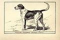 Foxhound BDL.jpg