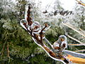 Freezing Rain in Canada 2013 6.JPG