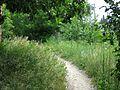 Fußweg - panoramio (11).jpg