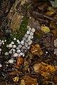 Fungi (5339202893).jpg