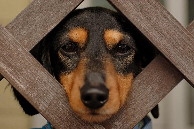 http://upload.wikimedia.org/wikipedia/commons/thumb/6/69/Funny_dog.jpg/800px-Funny_dog.jpg