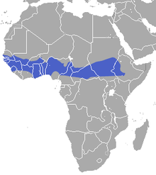 Gambian Epauletted Fruit Bat area.png