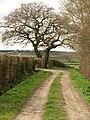 Gaston's Lane - geograph.org.uk - 1208555.jpg