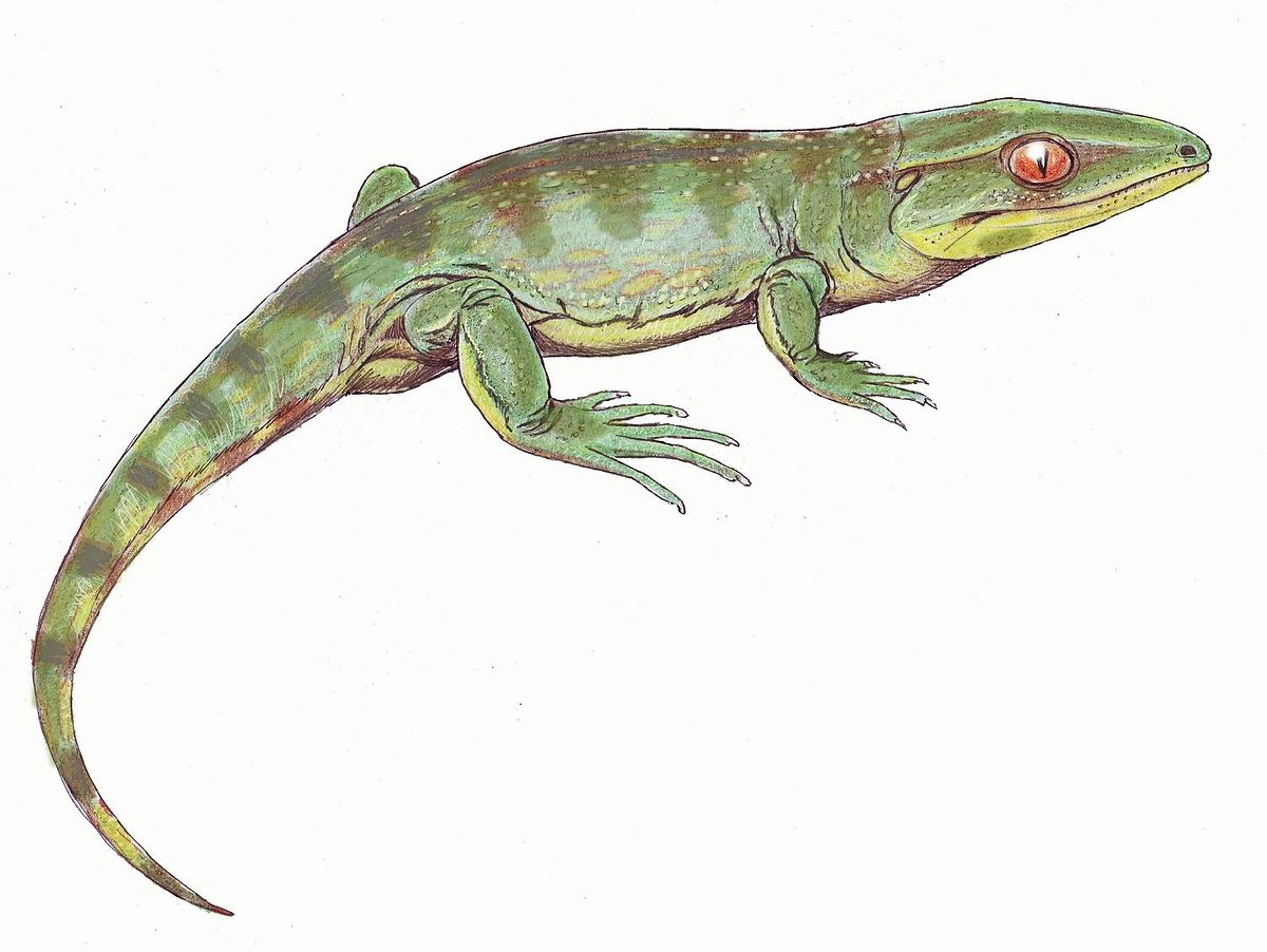 Anthracosauria - Wikip...