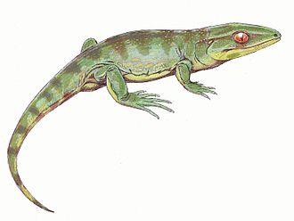 Reptiliomorpha - Gephyrostegus, a small terrestrial tetrapod