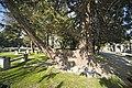 Glasnevin Cemetery - (442805476).jpg