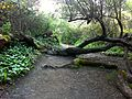 Glen canyon park (5674816554).jpg