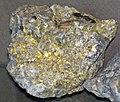Gold and quartz (Holy Terror Mine, Keystone, Black Hills, South Dakota, USA) 2 (17032692550).jpg