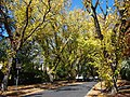 Grant Crescent Griffith ACT April 2013.jpg